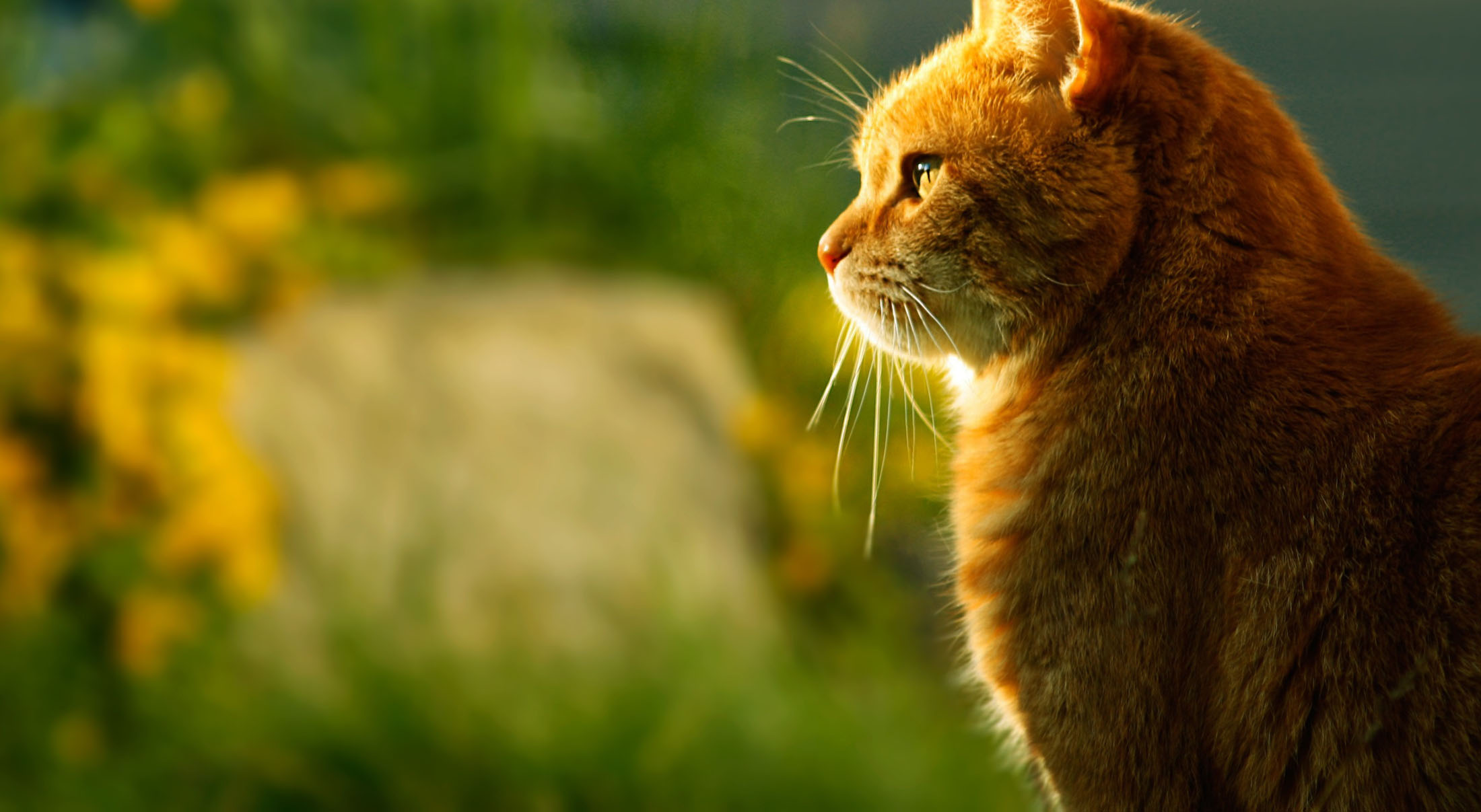 cat-318765-wide