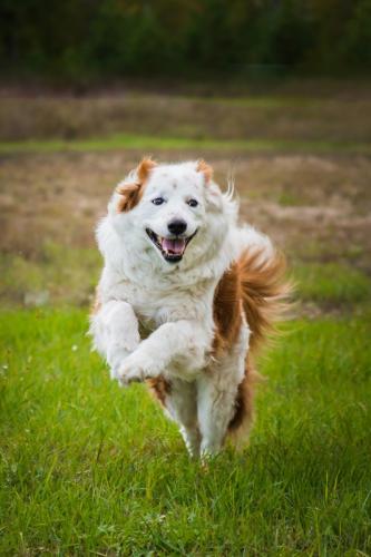 Annie running